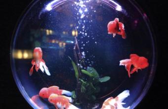 Fisch im All Titelbild